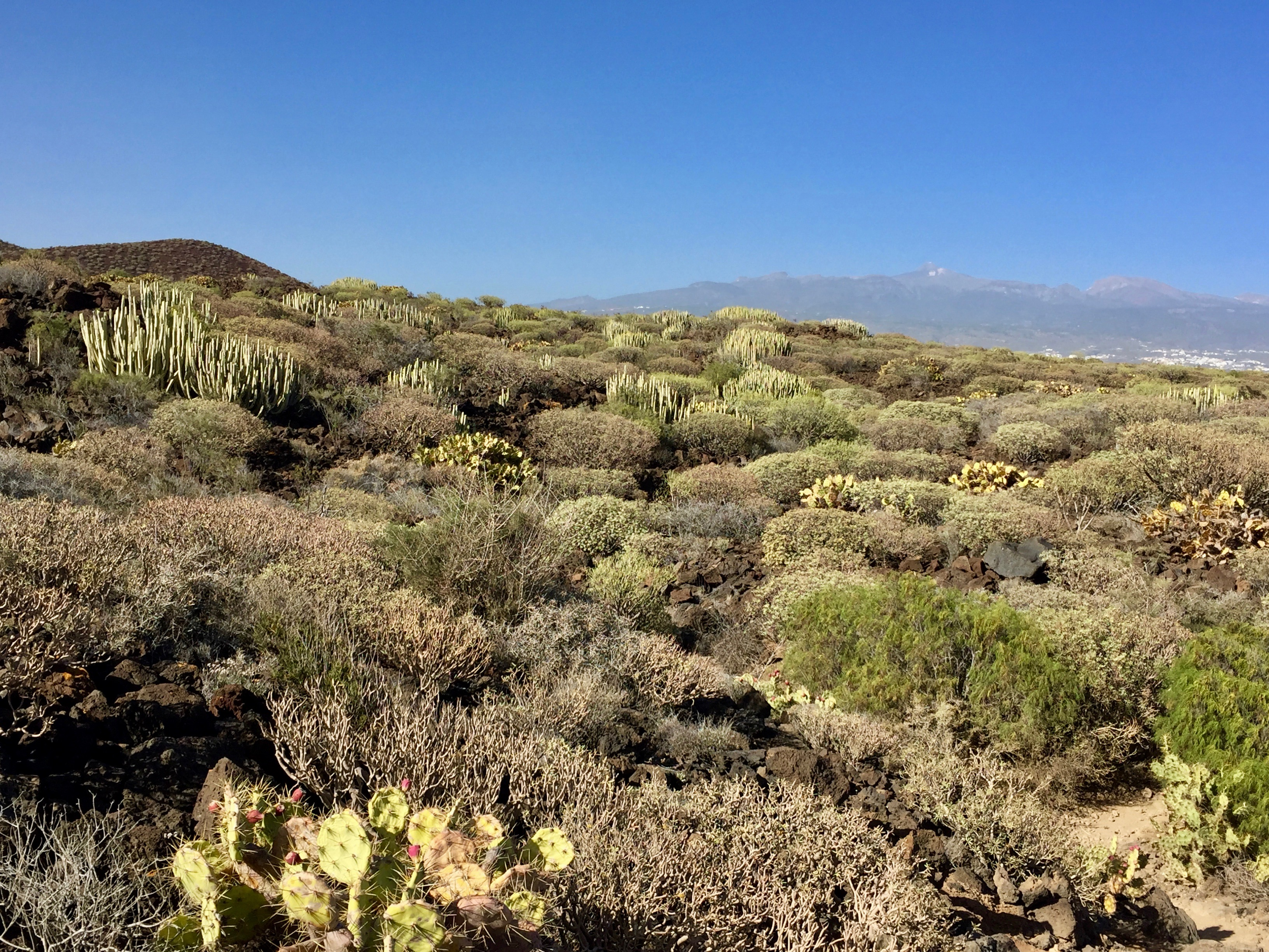 Tenerife South Cactus reserve