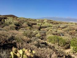 Tenerife South Cactus reserve
