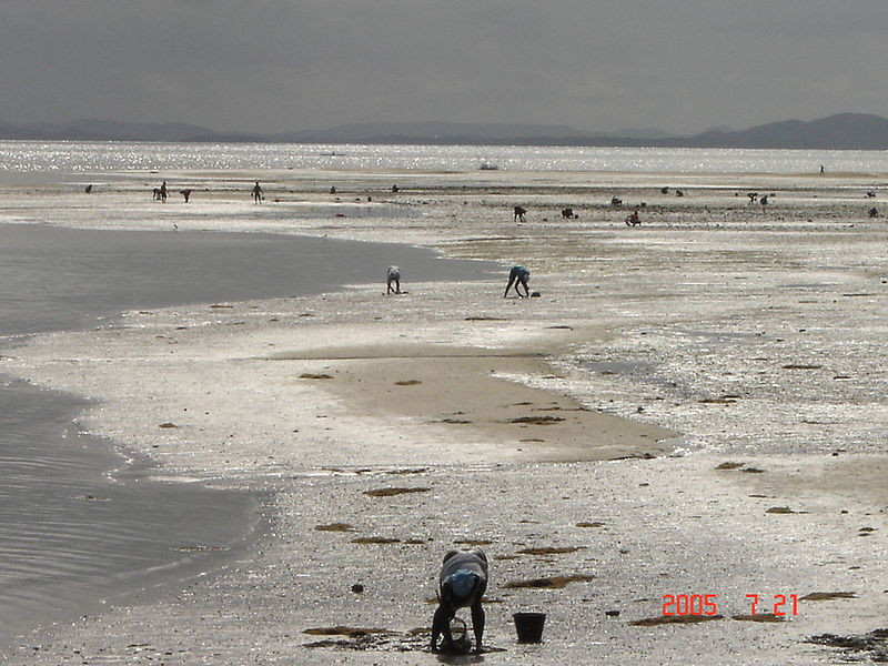 he photograph shows a mudflat during low tide in Salinas da Margarida, state of Bahia, Brazil. There is one woman harvesting shellfish in the foreground. She is bent over with a bucket by her side. She is wearing shorts and a short sleeve blouse and her hair is tied in a bandana. In the distance there are another twenty women doing the same activity. There are some hills in the distance and the date is written in the lower right corner of the photograph (July 21st 2015).