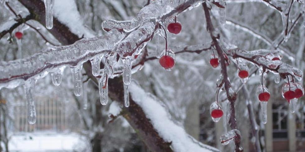Ashwood Waldorf Winter Revels