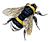 beebumble-graphicsfairy002d.png