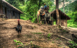 elephant and rooster