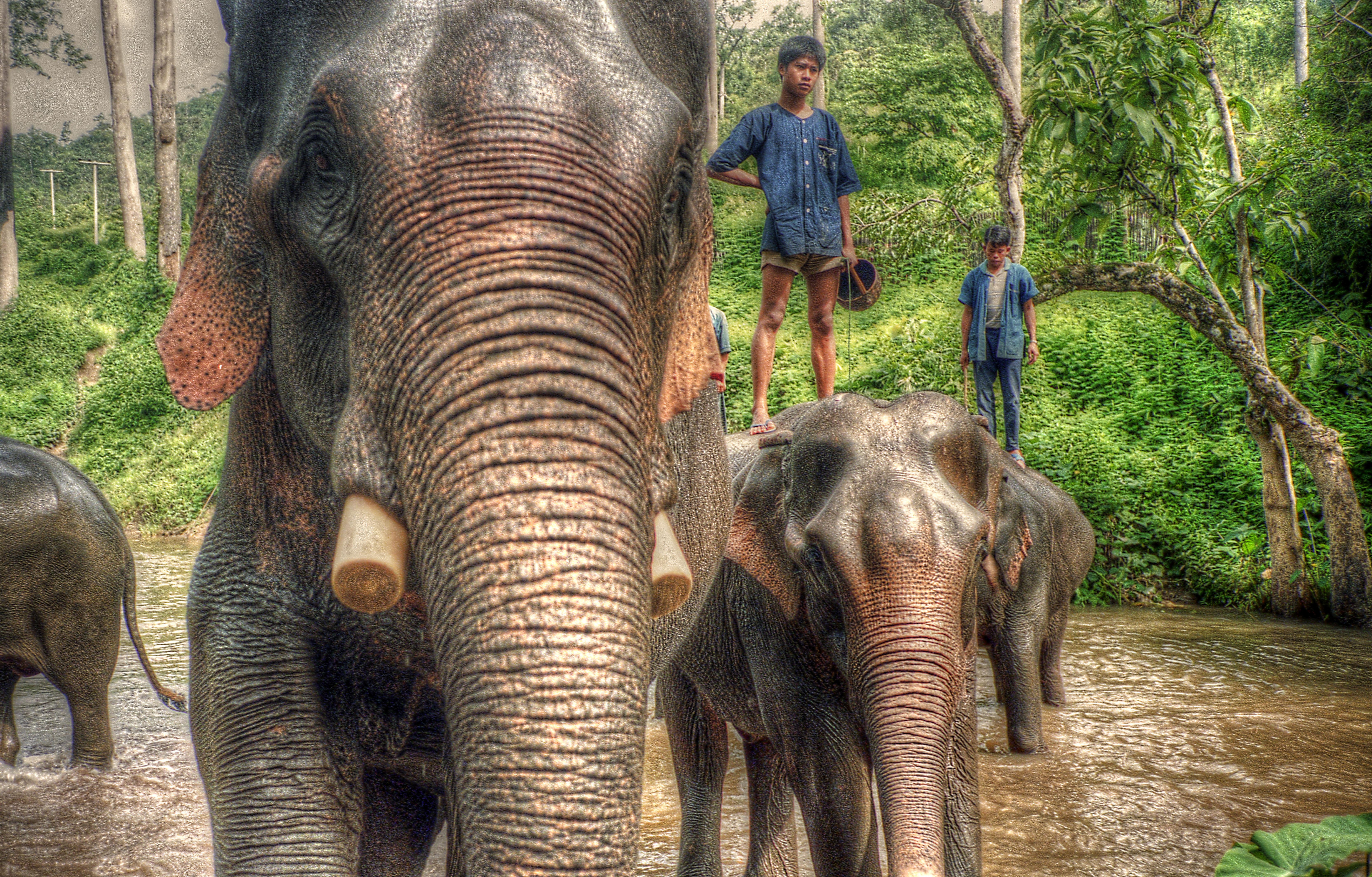 elephant keepers
