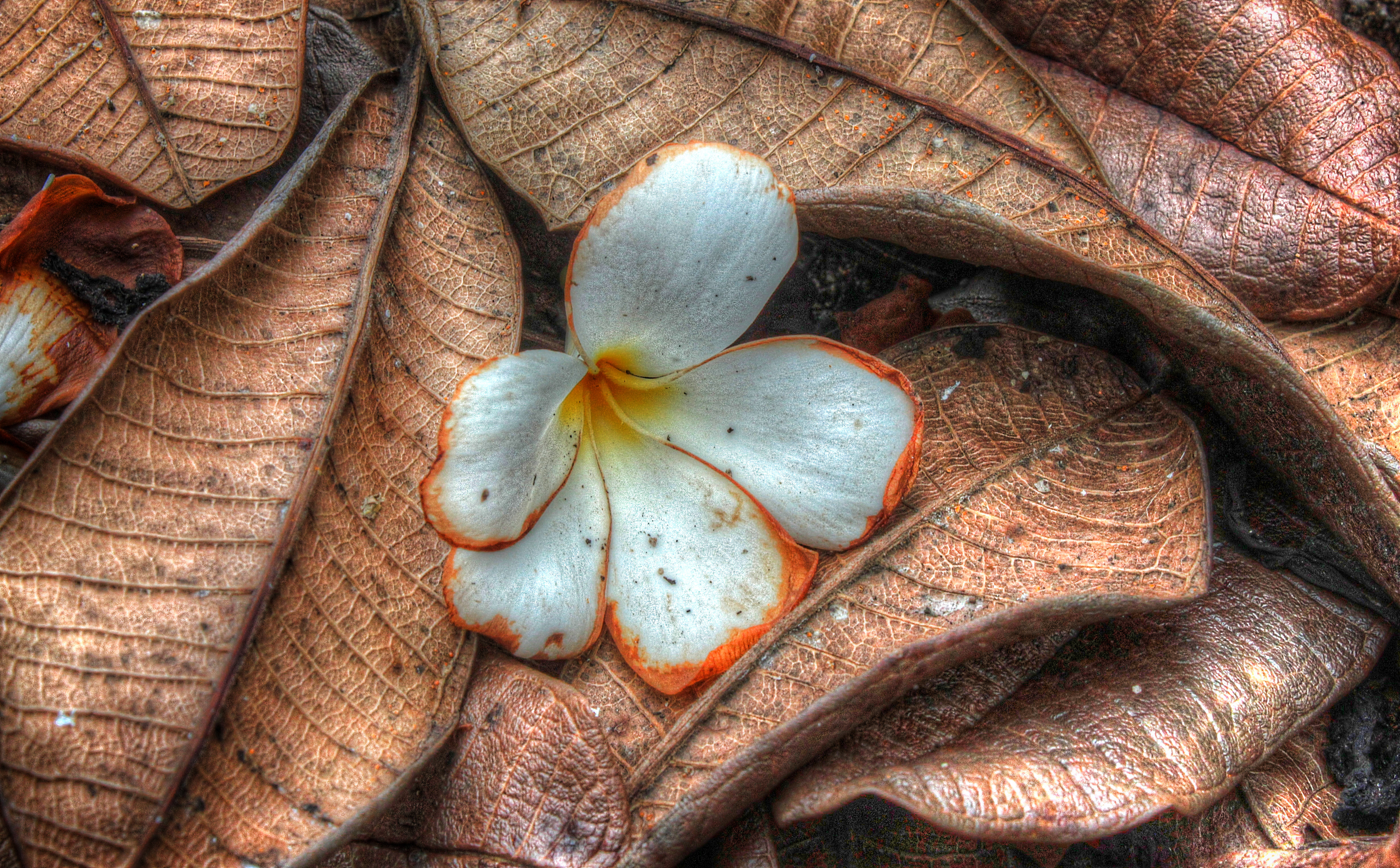ayut temple flower