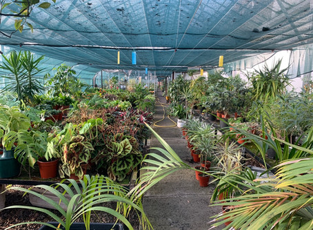 Predicting the Future. Part 9. Indoor Gardening