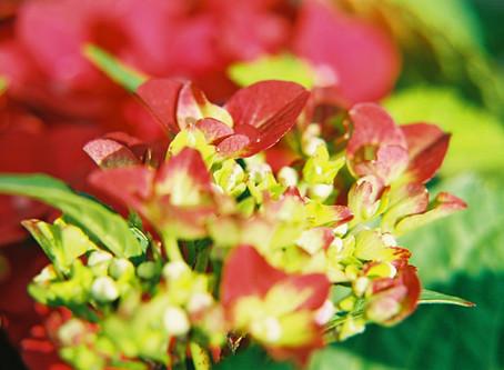 Predicting the Future. Part 10. Flowering Shrubs Forever