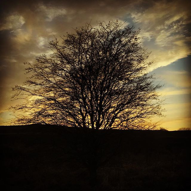Silhouette of a tree in Notherumberland