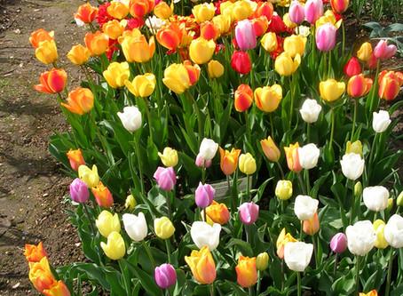 kitsch Spring