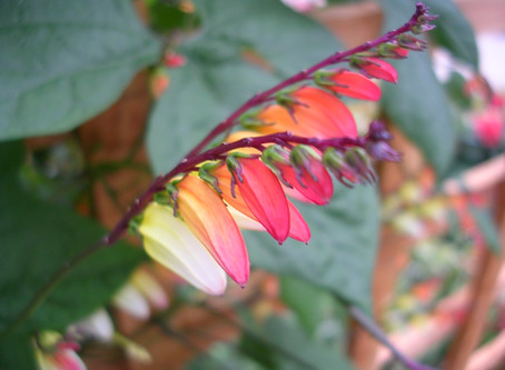 Top 5 Tender Climbing Plants To Grow From Seed