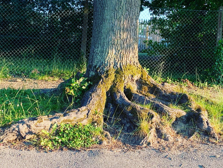 Thought for today - Blog Post 26/06/2020 Roots - The Full Post