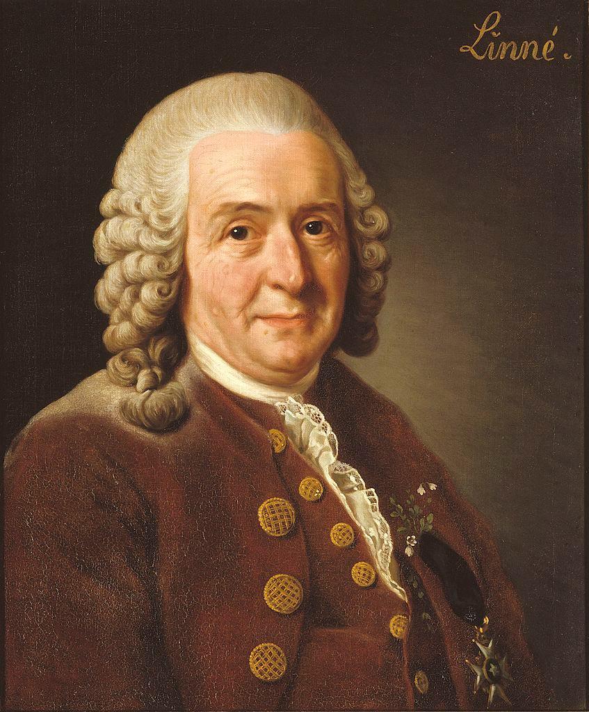 Alexander Roslin: Portrait of Carl Linnaeus, 1775