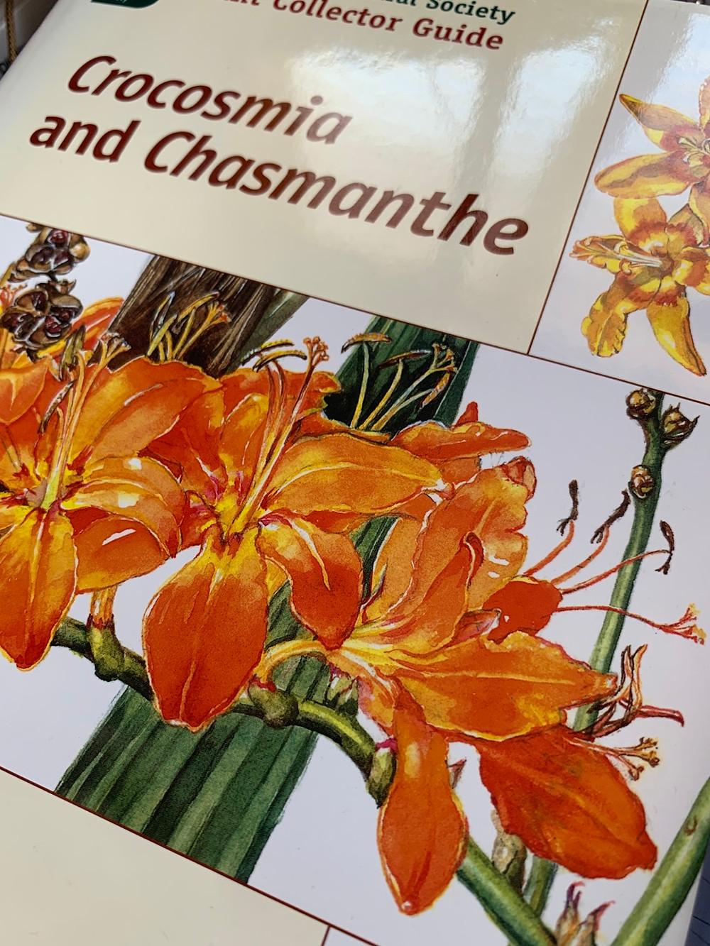 The definitive text on Crocosmia