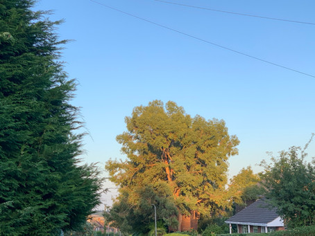 Thought for today - Blog Post 20/07/2020 Twilight