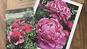 'Peonies' by Claire Austin - Book Review April 2021