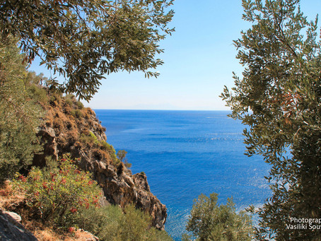 Why Olive Oil from the Sea? Our views and actions on sustainability and fair trade.