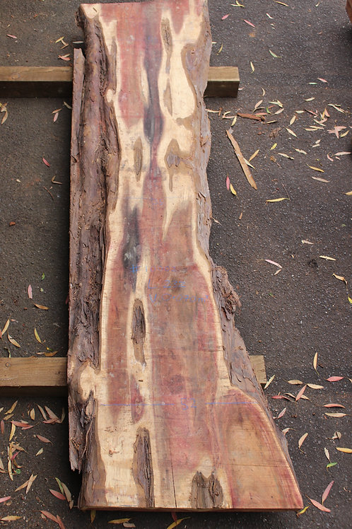 64mm English air dried yew (#10002)