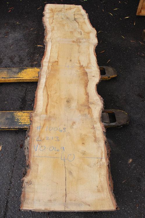 55mm English pippy air dried oak (#10043)