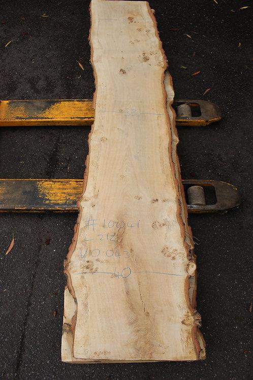 55mm English pippy air dried oak (#10041)