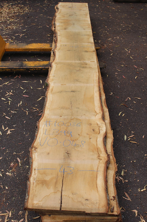 27mm English air dried oak (#10036)