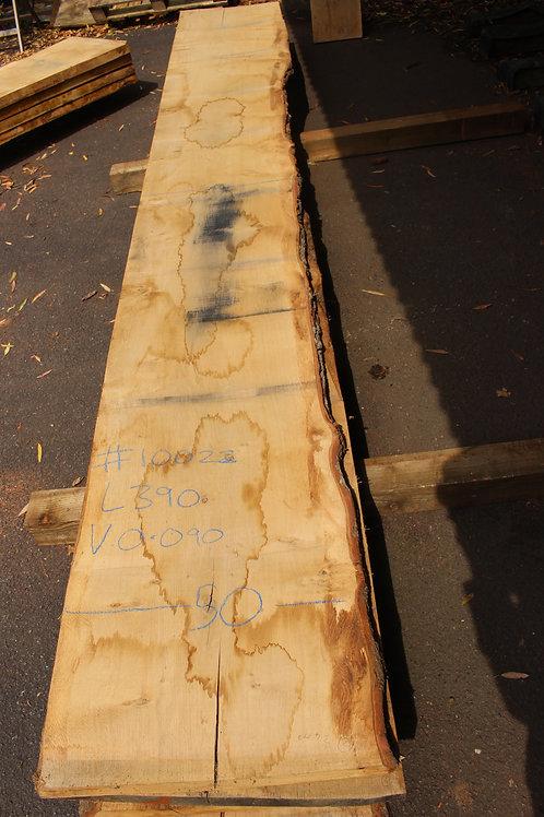 45mm English pippy air dried oak (#10022)