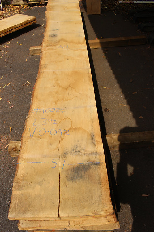 45mm English light pippy air dried oak (#10024)