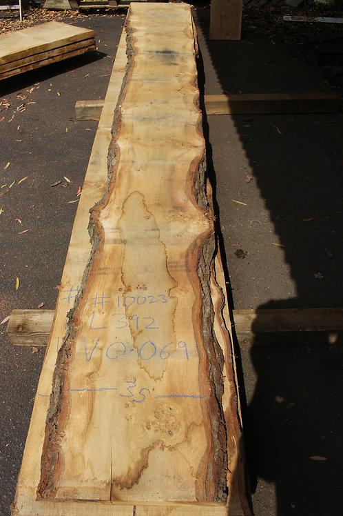45mm English pippy air dried oak (#10023)