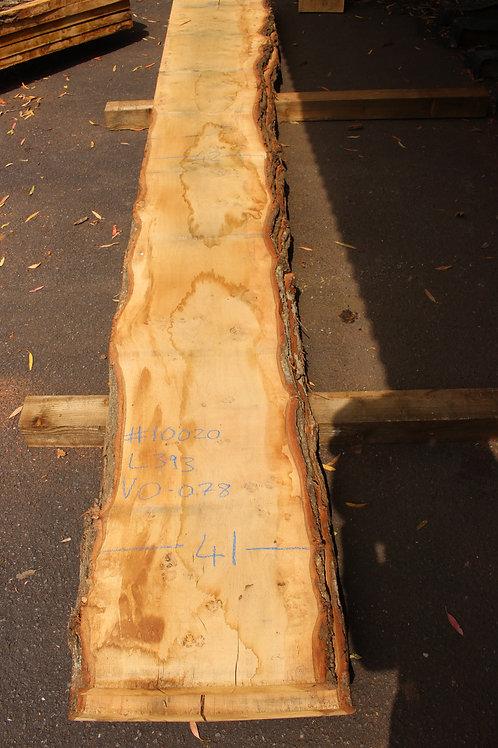 45mm English pippy air dried oak (#10020)