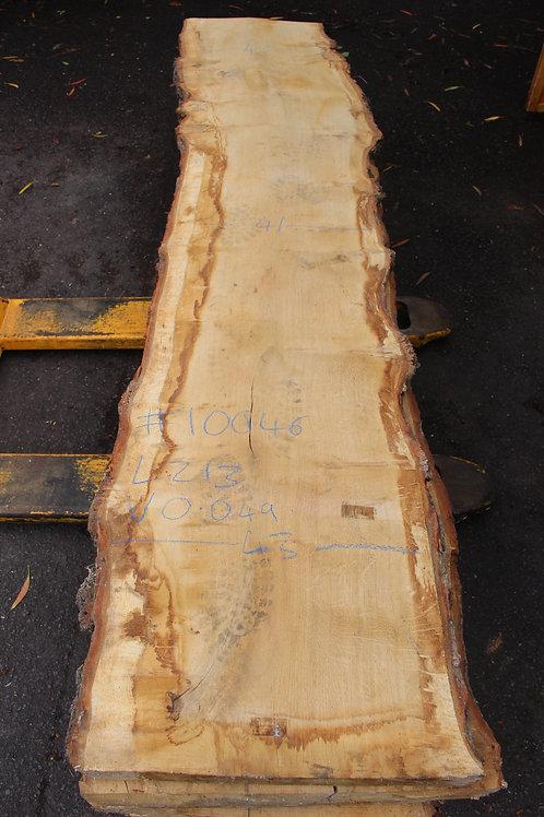 55mm English light pippy air dried oak (#10046)