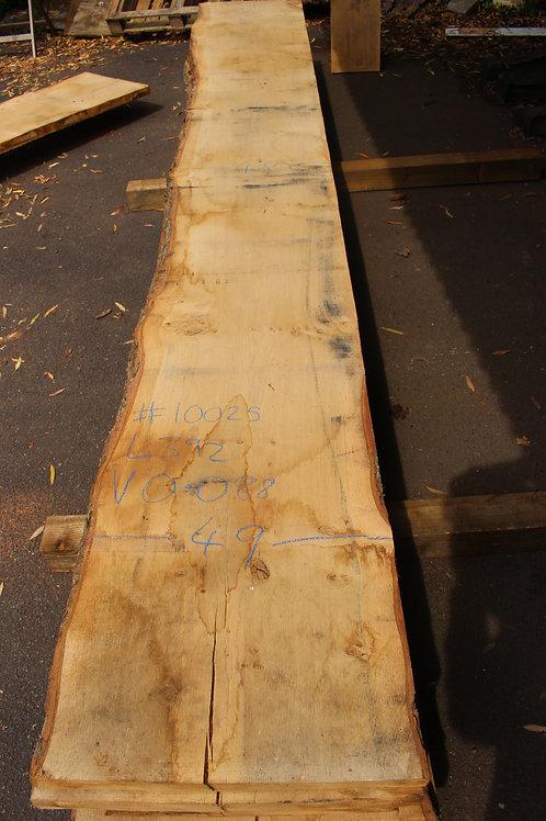 45mm English pippy air dried oak (#10025)