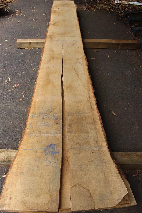 50mm English air dried oak (#10014)