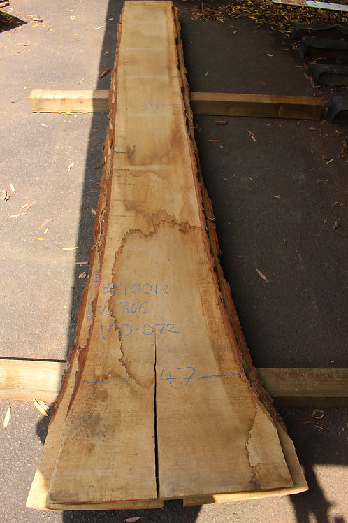 50mm English air dried oak (#10013)