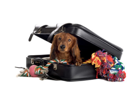 perro-dentro-de-una-maleta.jpg