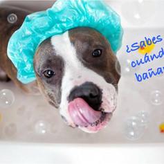 ¿sabes con que frecuencia debes bañar a tu perro?