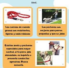 el mejor servicio de adiestramiento y obediencia canina