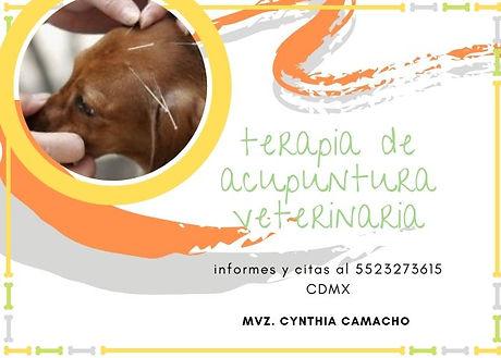 terapia de acupuntura veterinaria.jpg