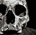 broumand_skull9.jpg