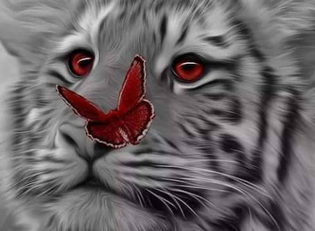 Strength of a Tiger, Spirit of a Butterfly