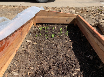 cold frame in front yard