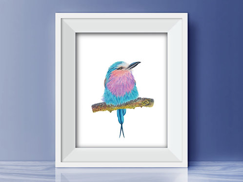 Lilac Breasted Roller Limited Edition Print