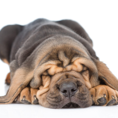 5 Dog Sleeping Positions and What They Mean