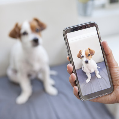 Checking Pets by Camera Is a Fun Obsession for More Americans