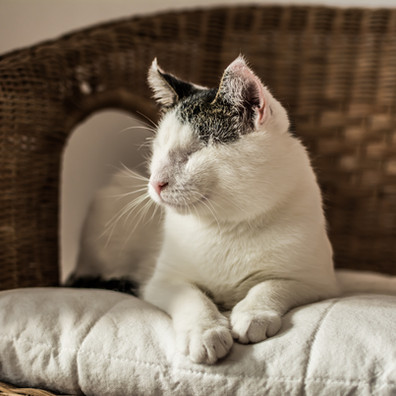 7 Tips for Living With a Blind Cat