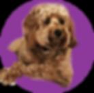 pet sitting_purple.png