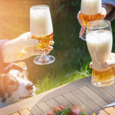 Can Cats and Dogs Drink Beer or Alcohol?