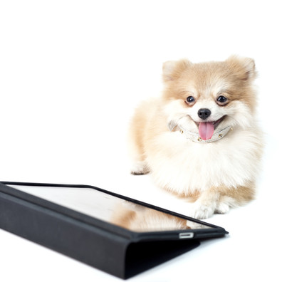 Training Senior Dogs to Play Games on Touch Screens