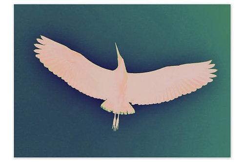 Heron Blue A4 Print