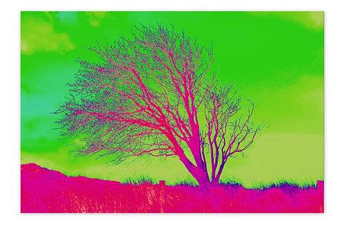 Apple Tree Green A4 Print