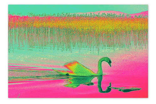 Swan Pink A4 Print