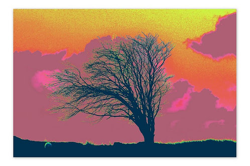 Apple Tree A4 Print