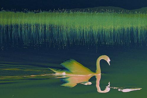 Swan Green A4 Print